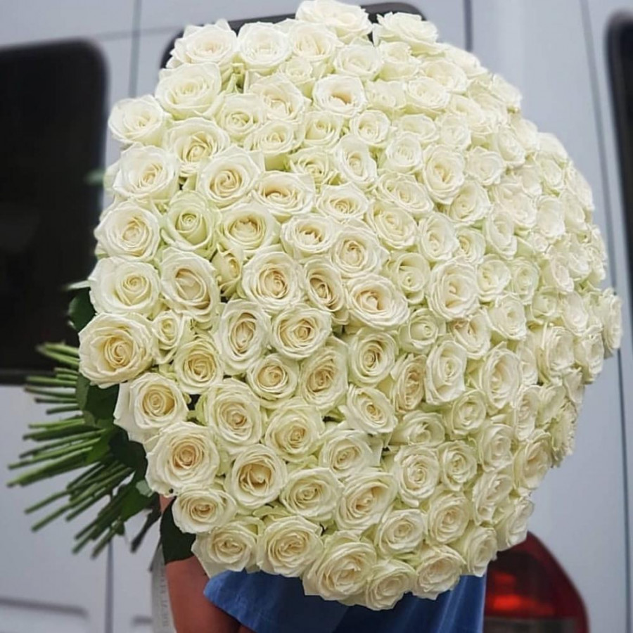 Белые розы 101 шт