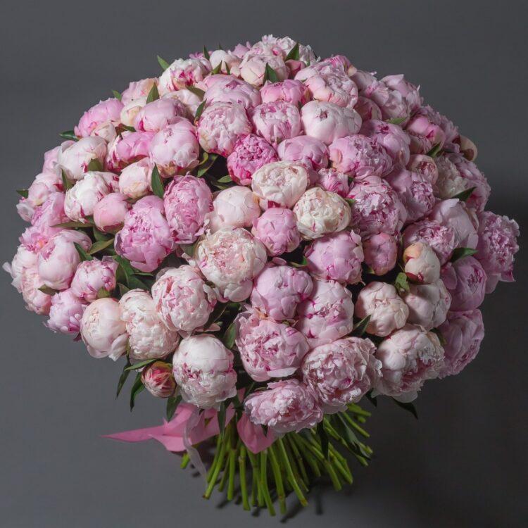 Розовые пионы 101 шт