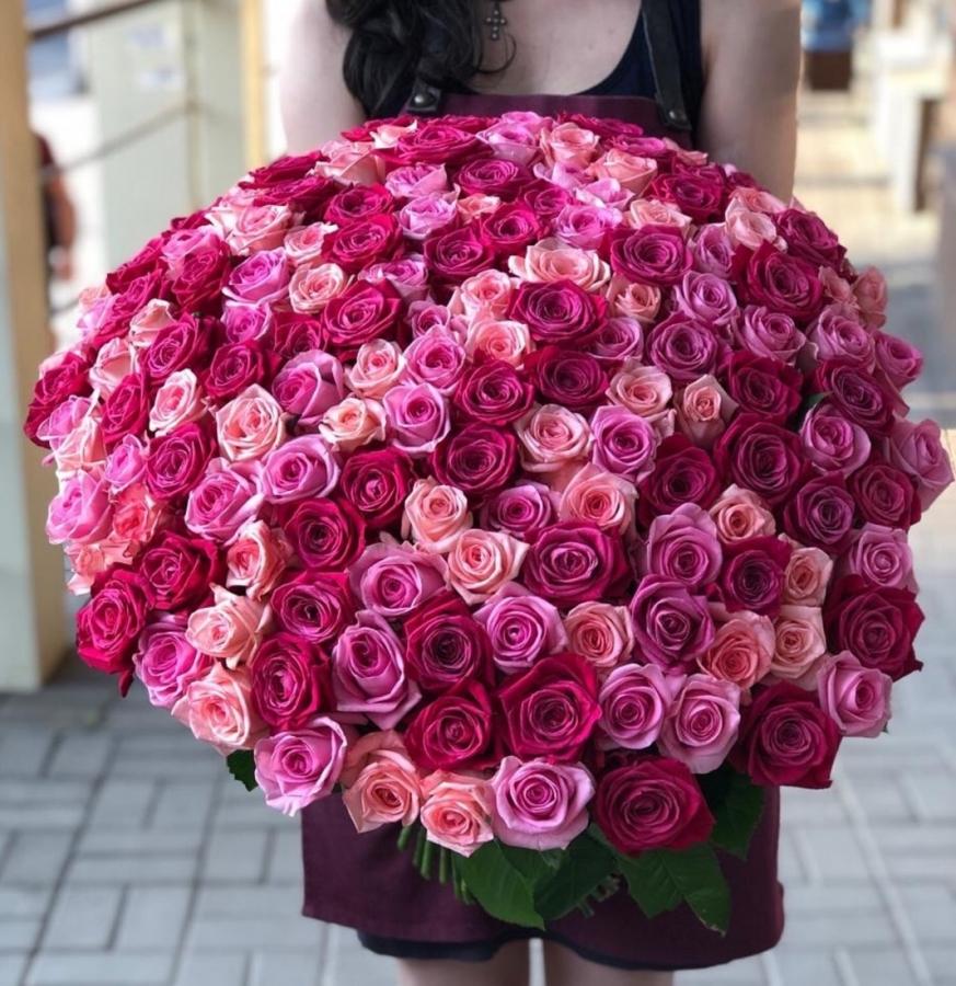 Разноцветные розы эквадор 101 шт